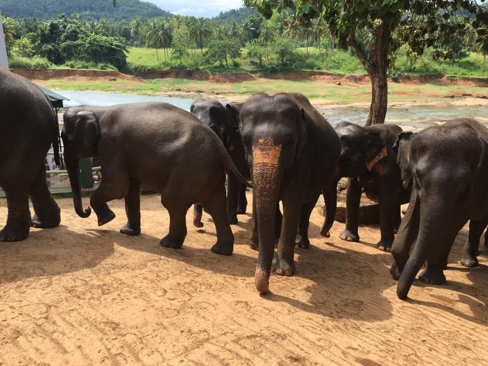 Kimberley Bruce – Sri Lanka