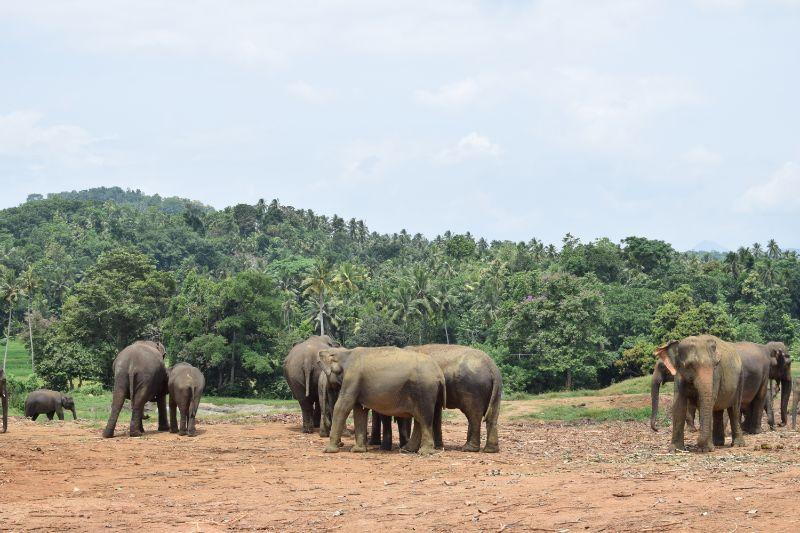 VoluntEars - Sri Lanka gallery